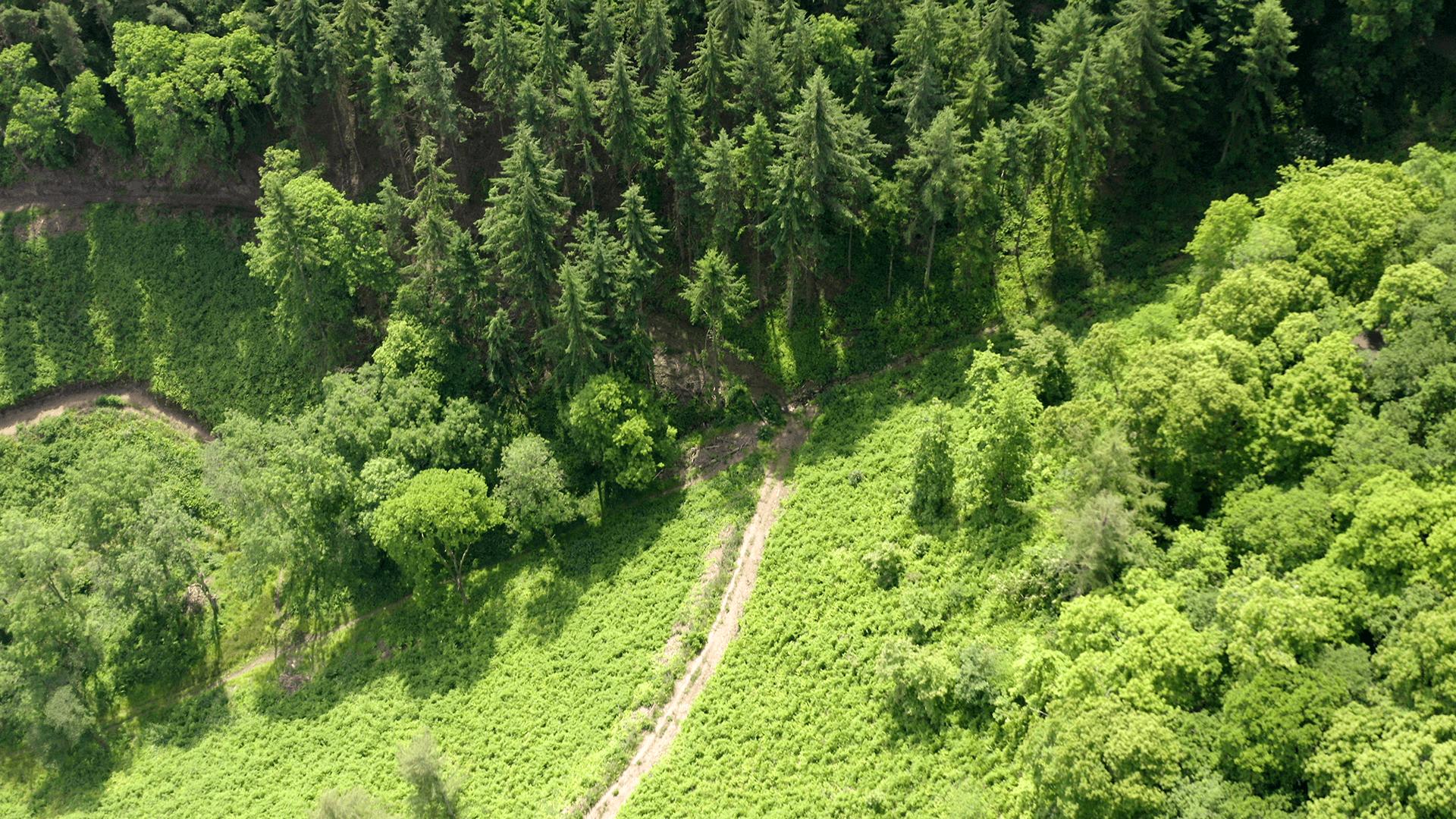 Porlock Weir Aerial Photograph